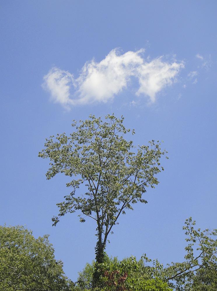 arbre11